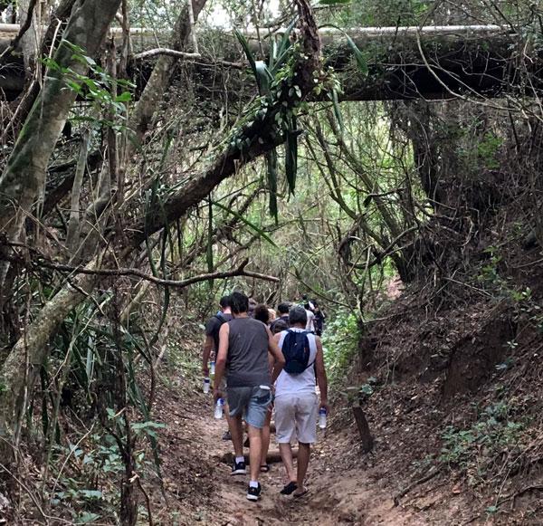 Day Use no Costão do Santinho: trilha no morro do macaco
