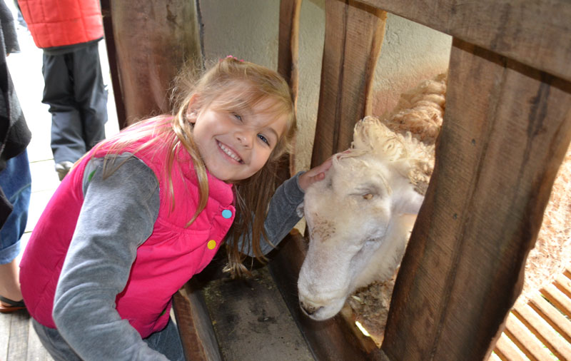 Teresópolis com crianças: Alice agradando ovelhinha