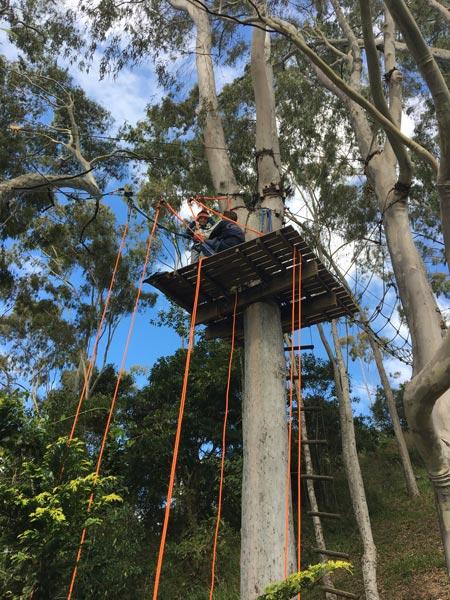 Teresópolis com crianças: Alice no alto da árvore